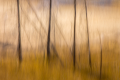21-01-DSC-6877_Dreamy-Forest_Steve-Shining