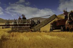 21-01-PGC-4773_Wheat-Harvest_Donald-Burnell