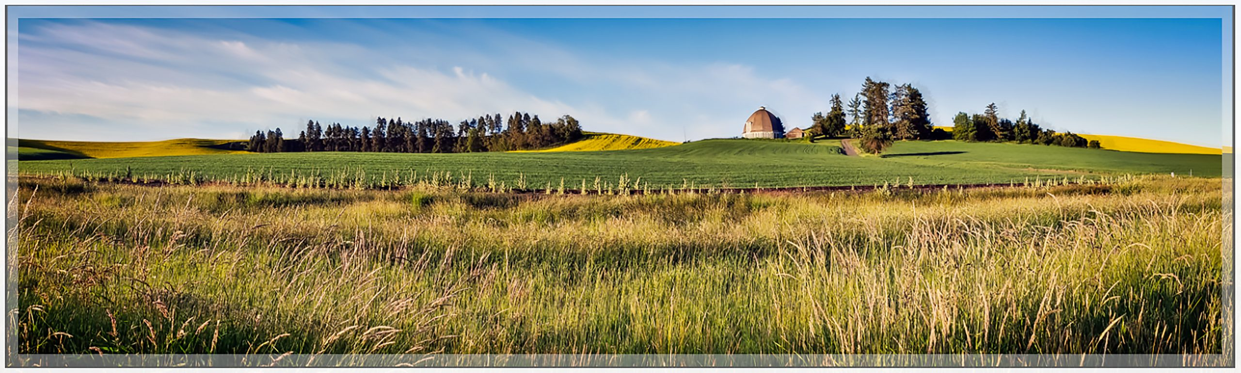 Farm on Palouse in June