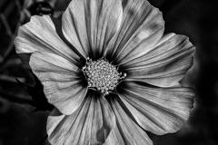 20-10-PGM-0190_Just-Beautiful_Donald-Burnell