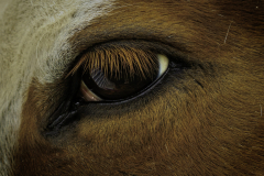 20-11-DGC-3070_Horse-Eye_Donald-Burnell