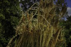 21-02-DGC-6889_The-Moss-Tree_Donald-Burnell